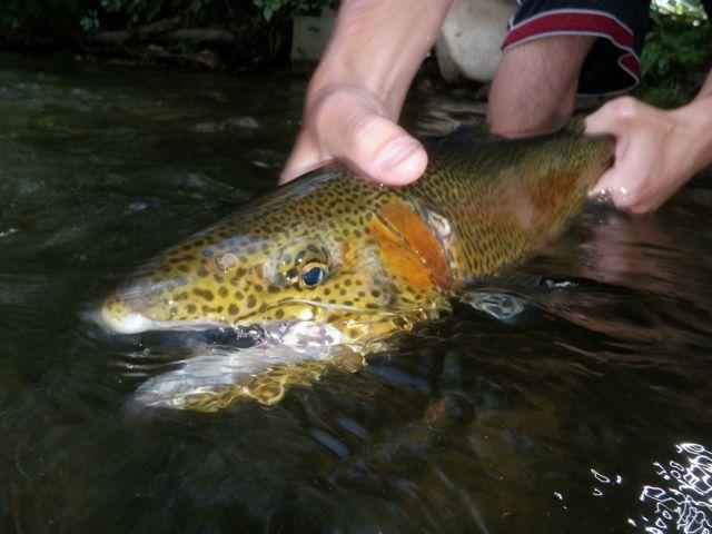 Easy fishin'