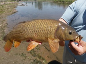 Gracie Guided Carp