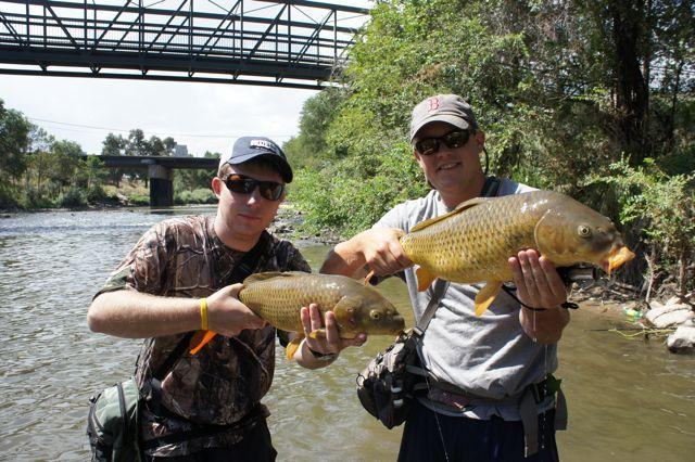 South Platte River Carp
